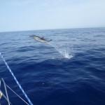Delfinzirkus