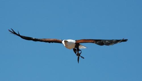 greifvogelshow