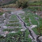 Anbau im Flusslauf