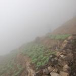 Kartoffelanbau am Steilhang