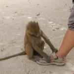Schuhkontrolle vom Affen