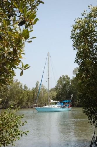 Admetus im Mandori Creek