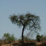 Baum an den Steilklippen