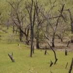 Mandori Creek