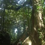 Bella vor kleinem Baum