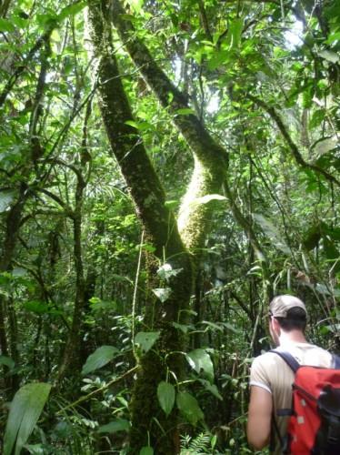Rein ins den Regenwald