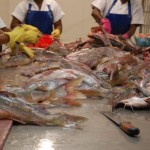 Fischfabrik Holsu