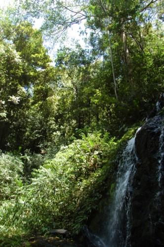 Im Regenwald neben einem Wasserfall