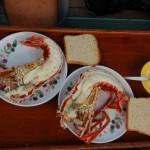 Lobster zubereitet