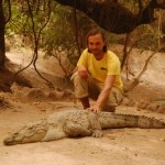 Gambia Krokodil angreifen