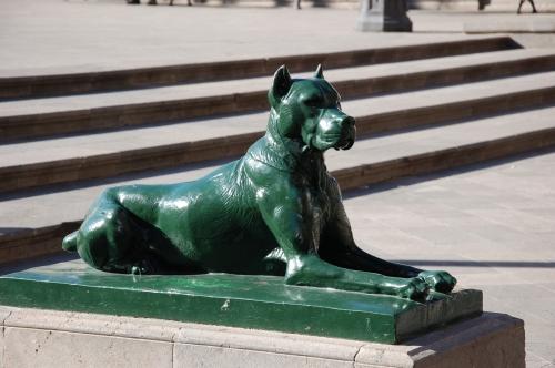 Las Palmas Hund