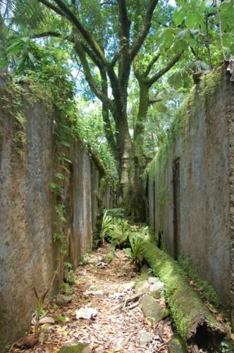 Franz Guayana Isle de Salut2