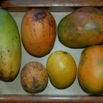 Mangosorten Grenada