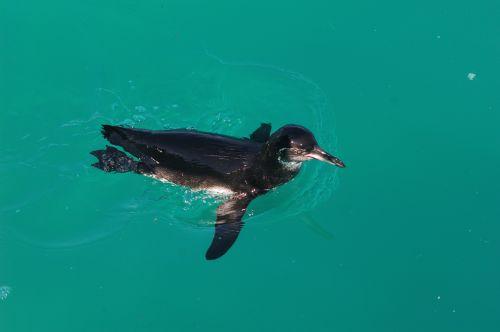 pinguin zu besuch
