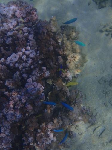 18 - Bunte Fische