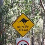 Wild life ahead